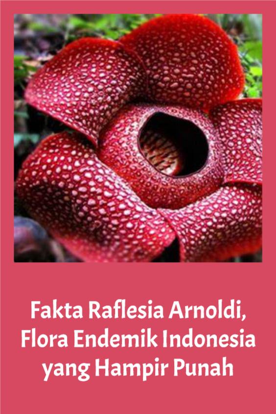 Fakta Raflesia Arnoldi, Flora Endemik Indonesia yang Hampir Punah
