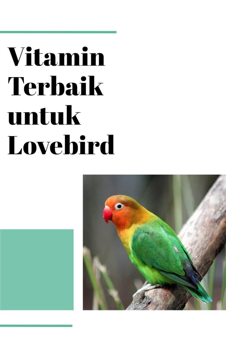Vitamin Terbaik untuk Lovebird